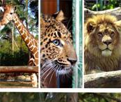 http://www.debrecenikilometerek.hu/kep/verseny/zoo-verseny.46.jpg